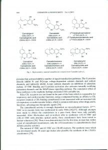 Endocanabinoids-03