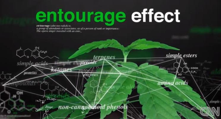 entourage-effect-Medical-marijuana