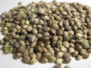 Seme Konoplje